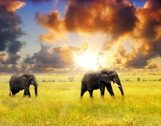 Tanzania Serengeti