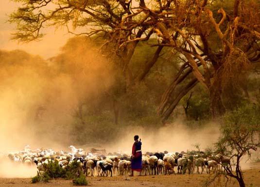 Tanzania shepherd
