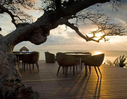 Dugong_Beach_Lodge_-_Tree.jpg